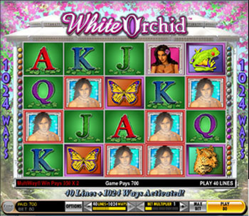 white orchid slot machine online
